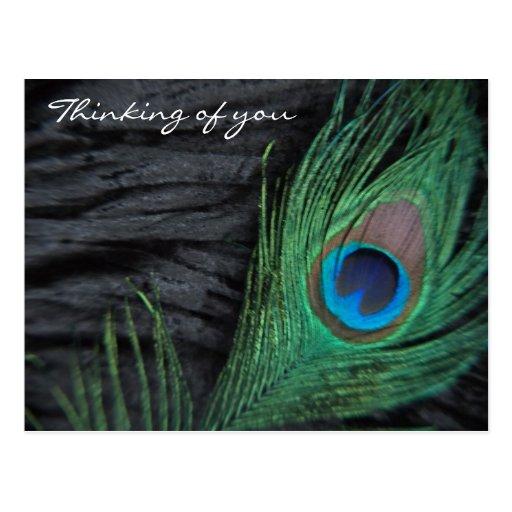 Del terciopelo del pavo real todavía de la pluma f postales