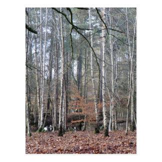 Delamere Forest Wetland Postcard