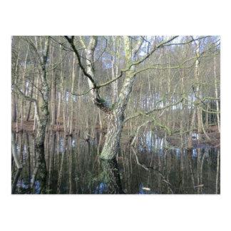 Delamere Forest Wetlands Postcard