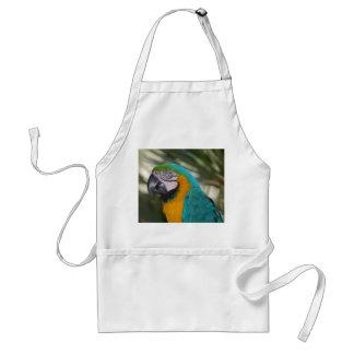 Delantal del Macaw del azul y del oro