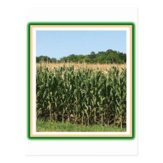 Delaware Corn Postcard