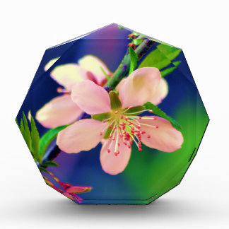 Delaware Peach Blossoms Acrylic Award