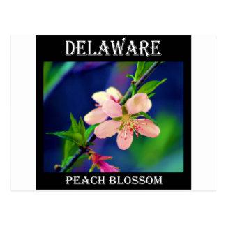 Delaware Peach Blossoms Postcard