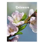 Delaware Post Card