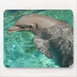 Delfín 2 alfombrillas de ratones