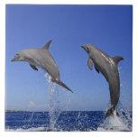 Delfin 2 azulejo cuadrado grande