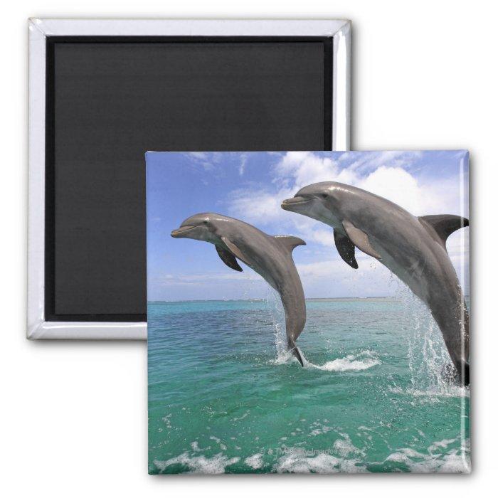 Delfin 2 Inch Square Magnet