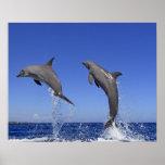 Delfin 2 póster