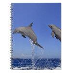 Delfin 2 spiral notebook
