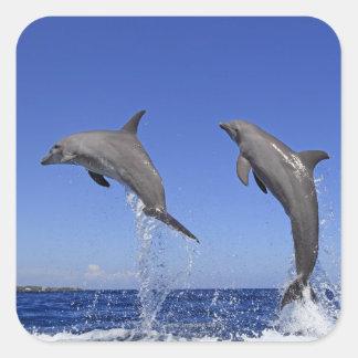Delfin 2 sticker