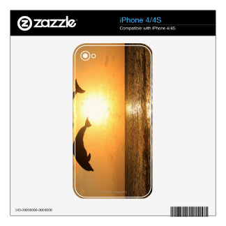 Delfin 3 decal for iPhone 4