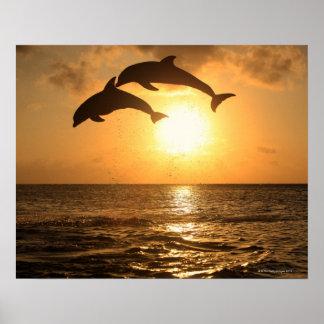 Delfin 3 poster