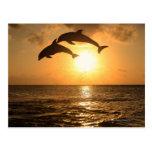 Delfin 3 post card