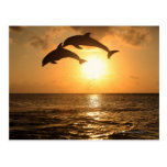 Delfin 3 postcard