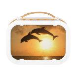 Delfin 3 yubo lunchbox