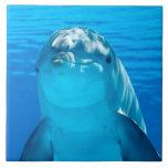 Delfín Azulejo Cuadrado Grande