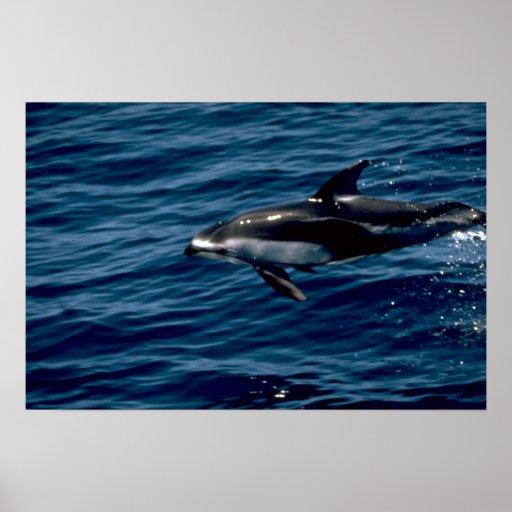 Delfín blanco-echado a un lado pacífico impresiones