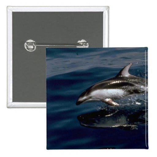 Delfín blanco-echado a un lado pacífico pin