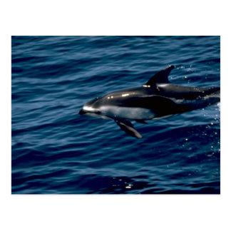 Delfín blanco-echado a un lado pacífico postales