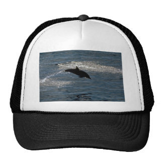 Delfín común gorro