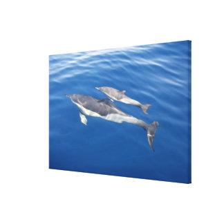Delfín común impresión de lienzo