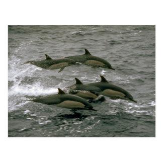 Delfín común tarjeta postal