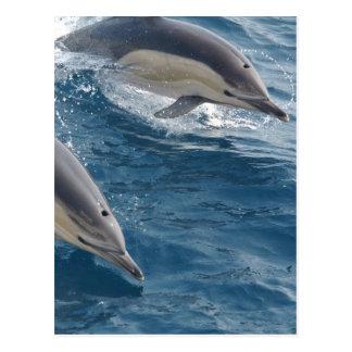 Delfín común postal