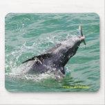 Delfín con el almuerzo alfombrillas de raton
