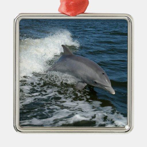 Delfín de Bottlenose Adorno Cuadrado Plateado