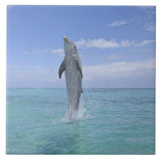Delfín de Bottlenose común que nada al revés encen Azulejo Cuadrado Grande