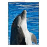 Delfín de Bottlenose Felicitaciones