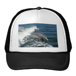 Delfín de Bottlenose Gorros