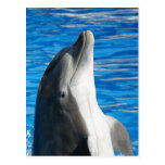 Delfín de Bottlenose Postales