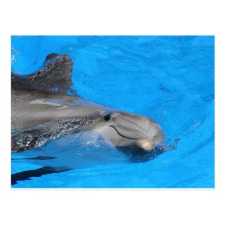 Delfín de Bottlenose sonriente Postal