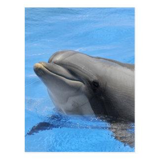 Delfín de Bottlenose Postal