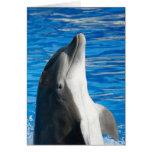 Delfín de Bottlenose Tarjetas