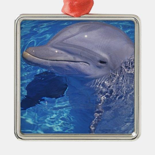 Delfín de Bottlenosed, Tursiops Truncatus Adorno Navideño Cuadrado De Metal