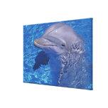 Delfín de Bottlenosed, Tursiops Truncatus Impresiones En Lona Estiradas