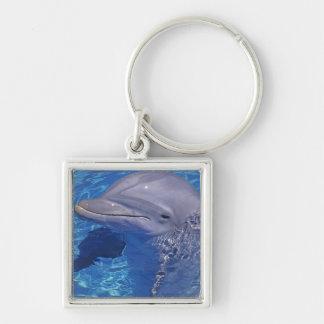 Delfín de Bottlenosed, Tursiops Truncatus Llavero Cuadrado Plateado