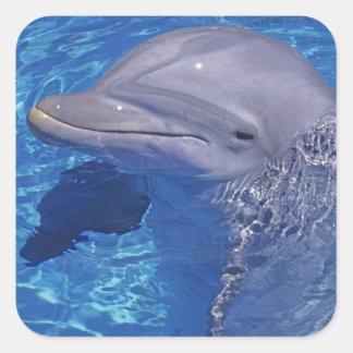 Delfín de Bottlenosed Tursiops Truncatus Colcomanias Cuadradass