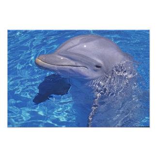 Delfín de Bottlenosed Tursiops Truncatus Arte Fotográfico