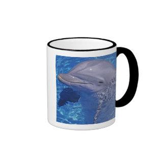 Delfín de Bottlenosed Tursiops Truncatus Taza De Café