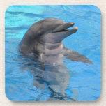 Delfín de la Florida