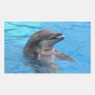 Delfín de la Florida Pegatina Rectangular