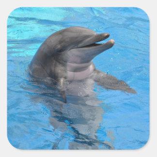 Delfín de la Florida Pegatina Cuadrada