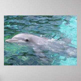 Delfín de la natación póster