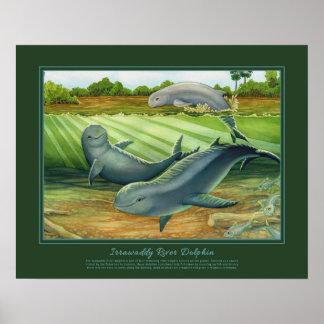 Delfín de río de Irrawaddy Póster