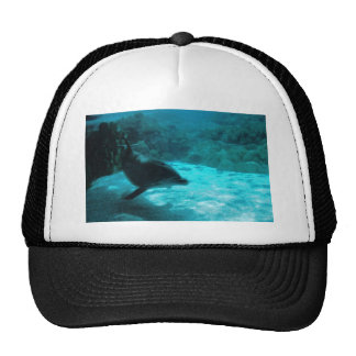 Delfín debajo del agua gorras