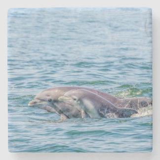 Delfín del amor de madre y prácticos de costa de posavasos de piedra
