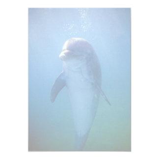 Delfín del bebé, acuario de La Habana del La, Cuba Comunicados Personales